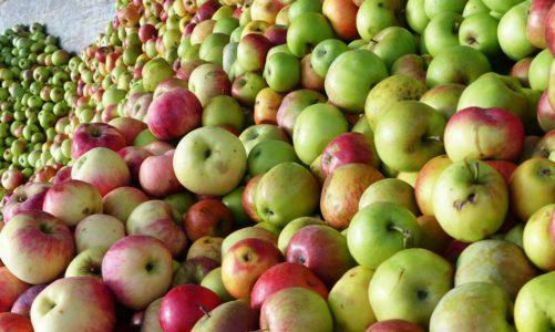 """In der Prignitz – Äpfel, Fruchtsäfte und echte """"Brandenburger"""""""
